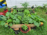 Garden Update-Four weekslater